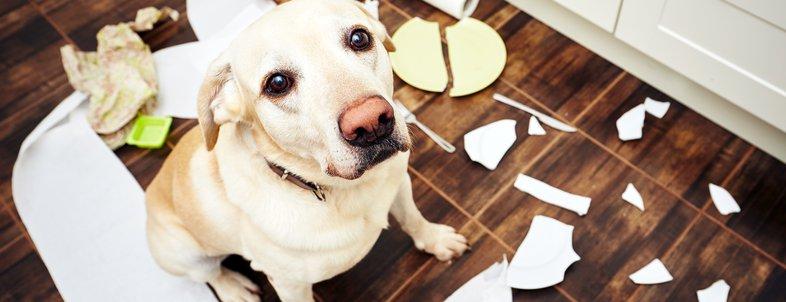 Hacks to Clean Pet Messes