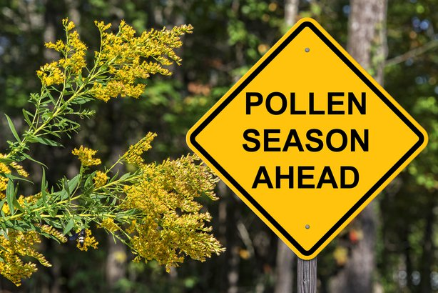 Pollen ahead sign to signify start of spring allergy season