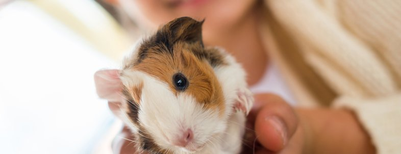 Low-Cost Pets to Own