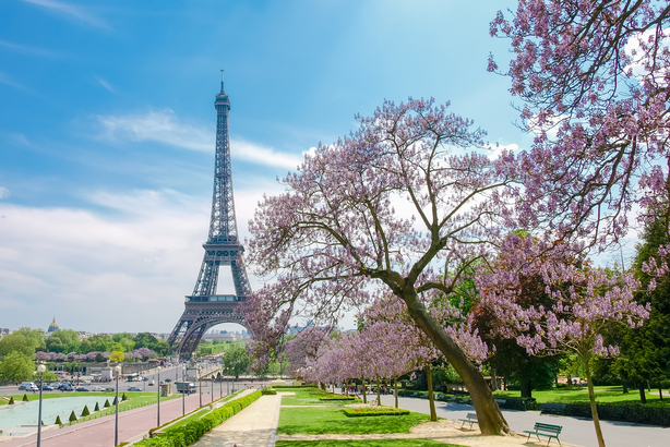 Paris in spring with cherry blossoms and the Eiffel tower in background