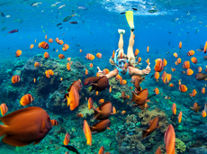 Woman snorkeling with a school of fish