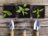 Garden Pots Plants