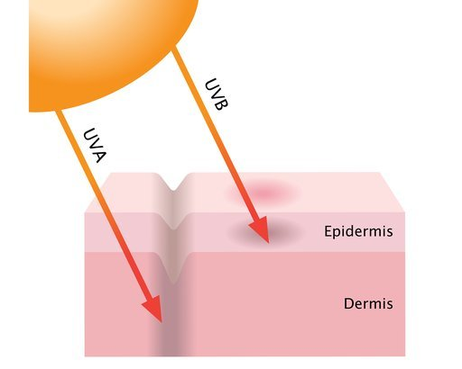 UVA and UVB on skin layers diagram