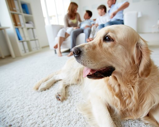 dog lying on the floor on background of family of four having rest at home