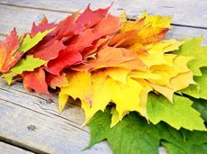 091516_leaf_peeping_places_slide_0_fs