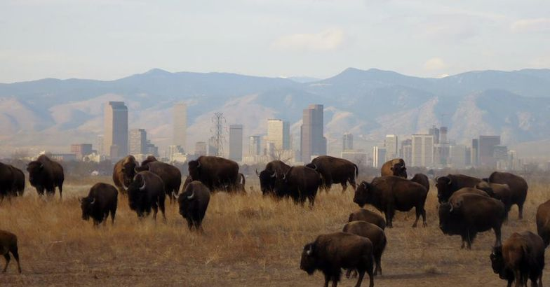 Rocky Mountain Arsenal National Wildlife Refuge, Denver