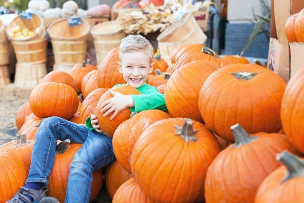 little excited kid enjoying time at pumpkin patch sitting in the huge pile of pumpkins
