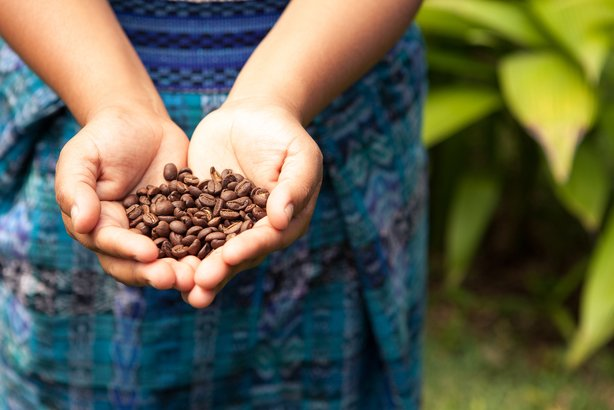 Handful of fresh coffee beans