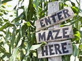 'Enter Maze Here' sign