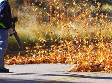 man cleaning the fallen leaves on the road by blower
