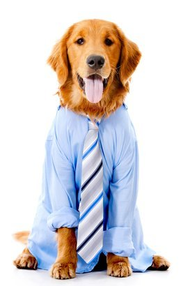 dog dressed in a business suit
