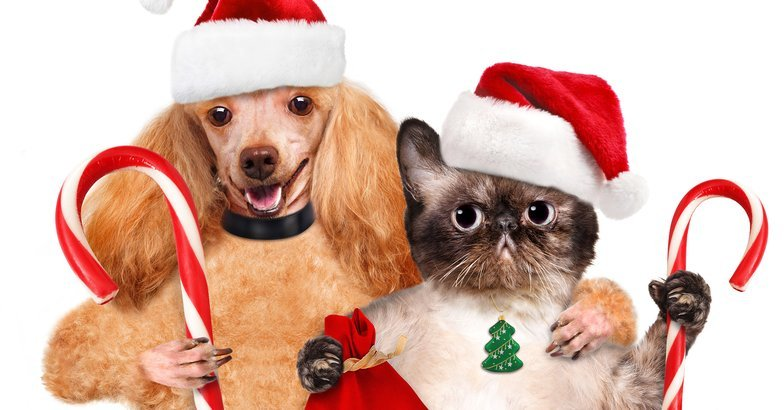 19 Cheap Christmas Gifts for Dogs and Cats   Cheapism