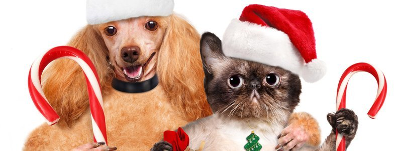 Cheap Holiday Gifts for Pets