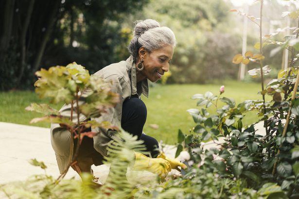 retired senior woman gardening in back yard