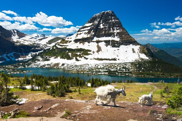 mountain Goats and hidden lake in Glacier National Park, Montana