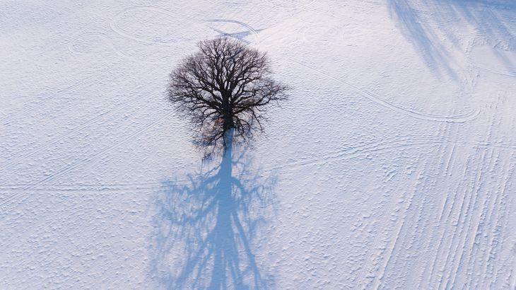 Latvian winter tree by drone