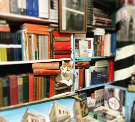 Libreria Acqua