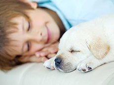 100215 cheapest dog breeds 1 310