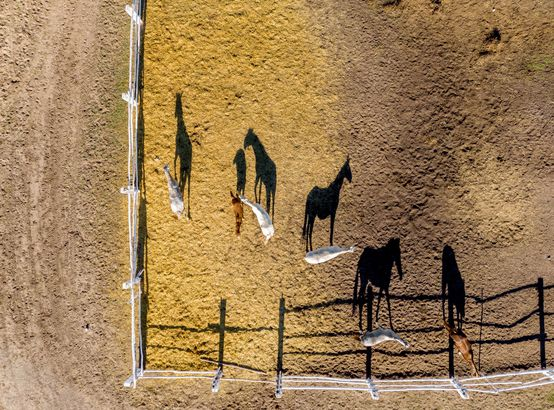 Horses at a farm by drone