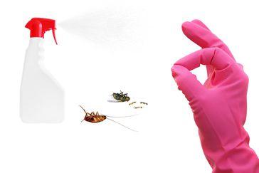 13 Métodos Naturales De Control De Plagas Para Deshacerse De Ellas Cheapism Com