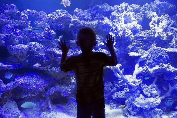 child looking into large aquarium