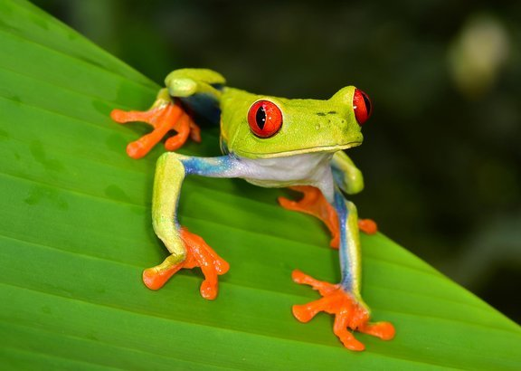 Rainforest Vacations Cheapism