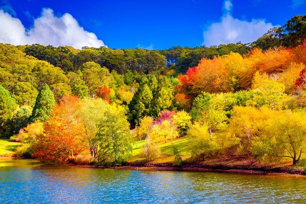 Fall in Adelaide Hills, Australia