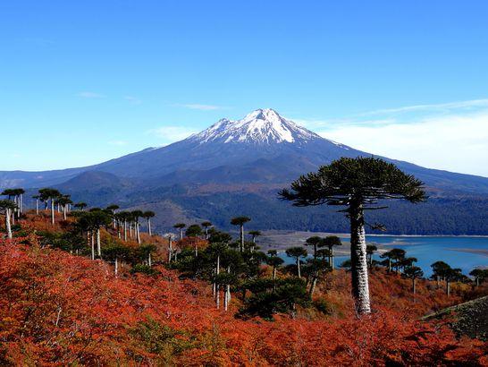 Fall in Araucaria, Chile