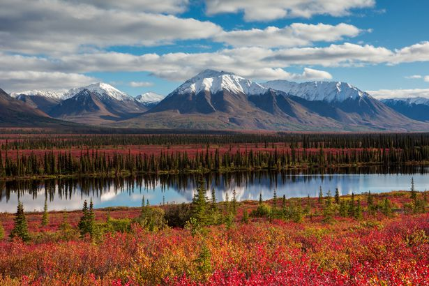 Fall in Denali Mountain, Alaska