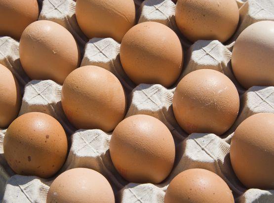 battery eggs