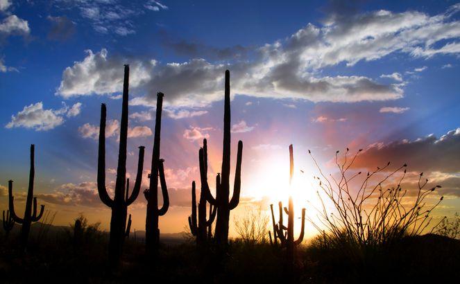Arizona desert