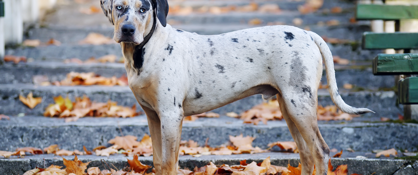 6bfbafa453663 25 Rare Dog Breeds for Pets That Will Stand Out at the Park ...