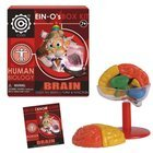 Ein-O's Human Brain Box