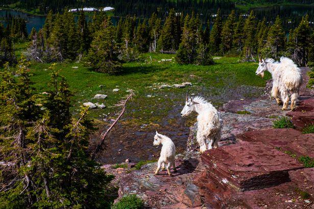 Hidden Lake Trail at Glacier National Park