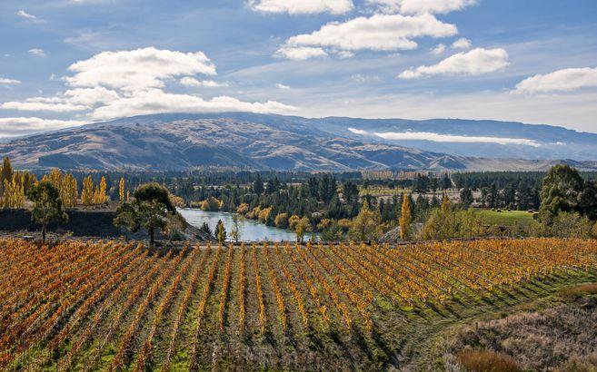 Fall in Otago, New Zealand