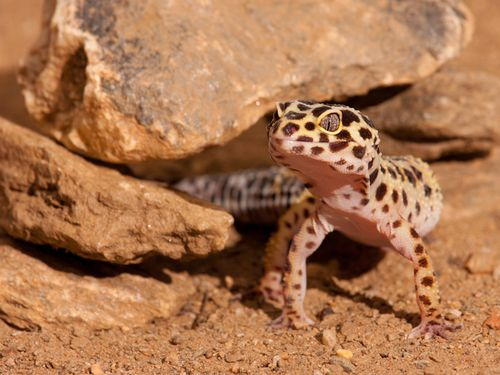 Cheap Pets That Are Easy to Take Care Of