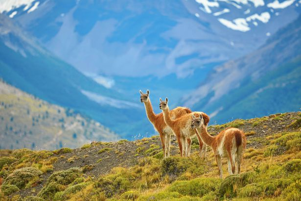 Patagonia National Park, Chile