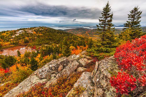 Acadia fall foliage