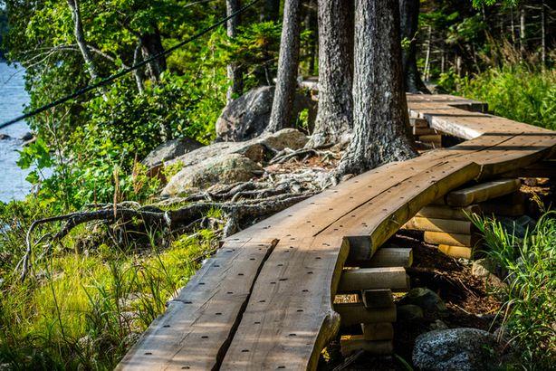 Acadia plank paths
