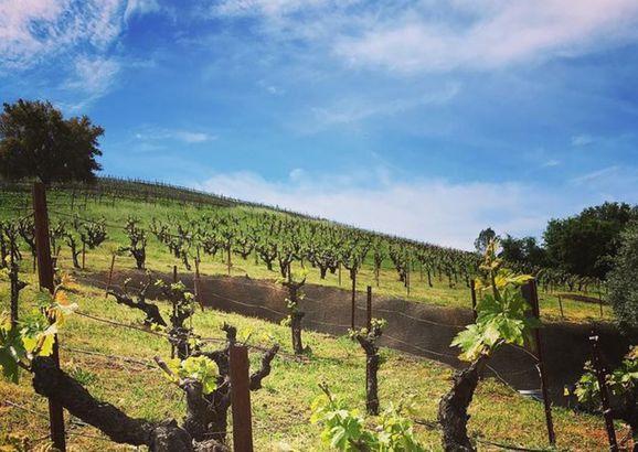 Bella Vineyards & Wine Caves, Healdsburg