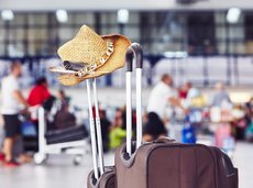 best_frequent_flyer_programs_2500