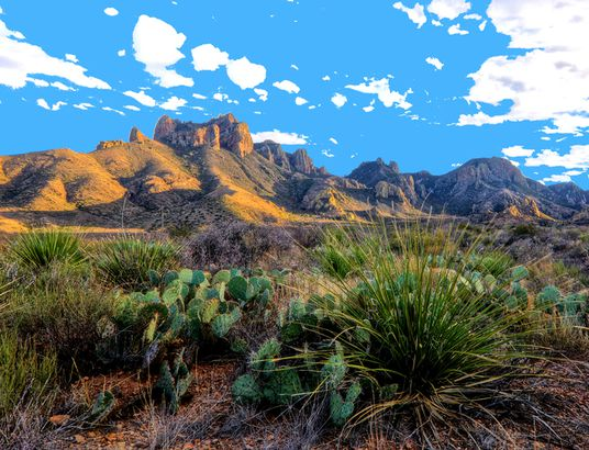 Cacti in Big Bend