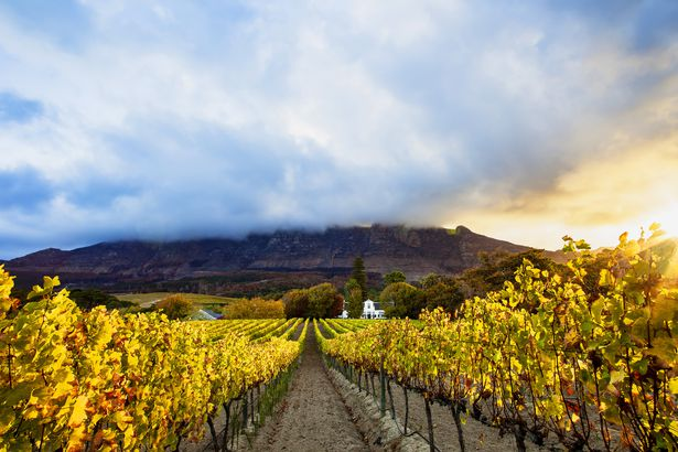 Fall in Cape Town, South Africa