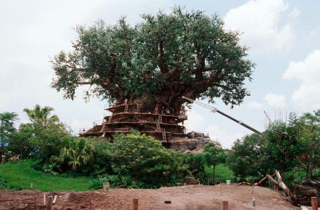 Disney World's Animal Kingdom opens