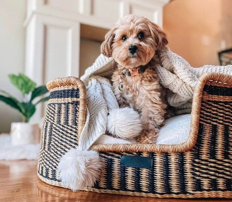 Basket Dog Bed