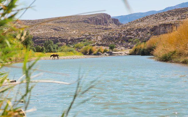 Horse crossing Rio Grande