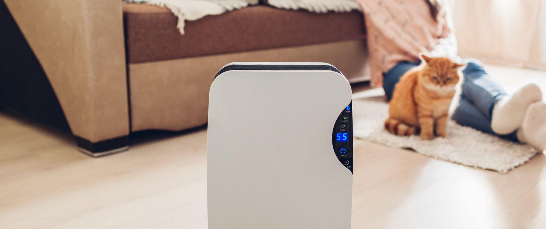 Best Dehumidifiers Under $250 | Cheap Dehumidifiers | Cheapism com