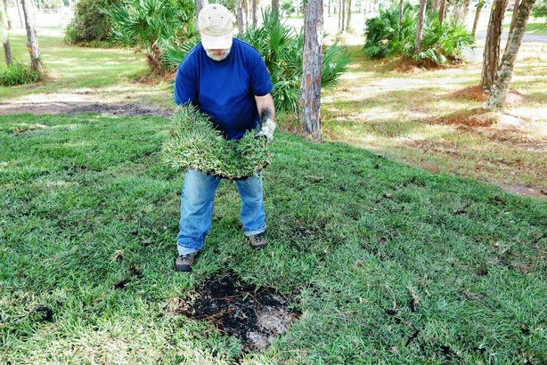 man placing new sod grass to landscape bare area