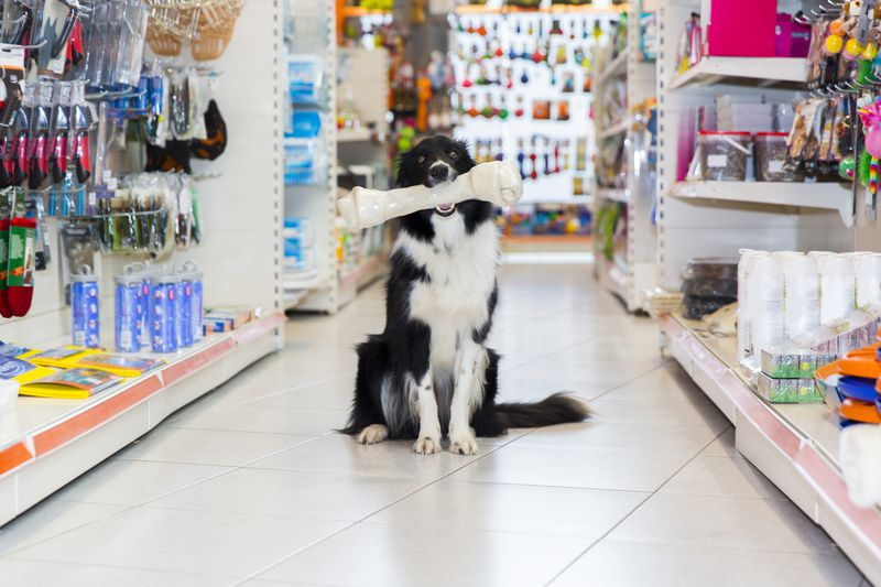 Petco Vs Petsmart Pet Store Prices Cheapism Com
