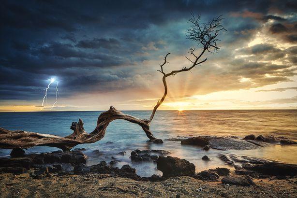 Kona Beach tree